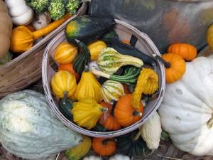 bushel of pumpkins and squash